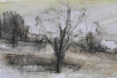 29-un-albero-solo-grafite-e-olio-su-carta-25-x-35-2018